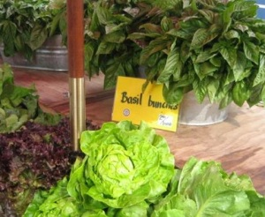 lettuce display