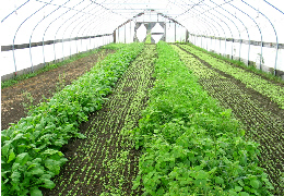 High tunnel, photo courtesy of USDA-NRCS, NY