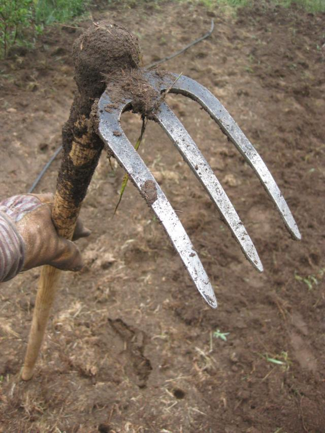 "The Chillington fork hoe.  7"" prongs are perfect for uprooting quackgrass rhizomes.  Long handle is ergonimic.  All weeding can be done from a standing up position."