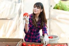 Inspecting tomato