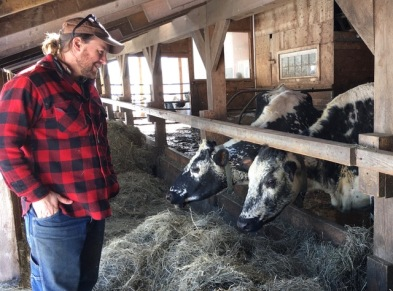 Paul Lisai with his cows